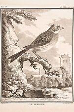 Histoire Naturelle Oiseaux Buffon v 1780 par Legrand -de Sève LE VERDIER