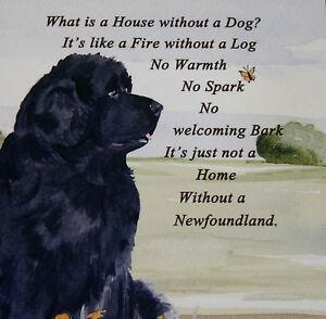 NEWFOUNDLAND-DOG-HARDBOARD-PLAQUE-TILE-WATERCOLOUR-PRINT-SANDRA-COEN-ARTIST
