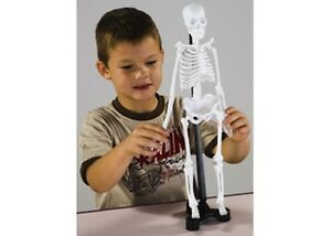 mini skeleton edu-toys 46cm human model anatomy new box | ebay, Skeleton