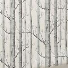 Modern Forest Birch Tree Rustic Minimalist Woods Black White Wallpaper Roll