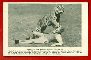 MAN-AND-TIGERT-VINTAGE-POSTCARD-1224