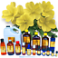 3ml-Essential-Oils-Many-Different-Oils-To-Choose-From-Buy-3-Get-1-Free thumbnail 37