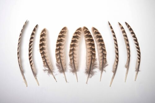 Gold Dipped Natural Female Pheasant Wing Feathers 12-15cm UK Ethically Sourced