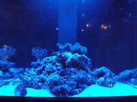 """48"""" Moon Light Moonlight Shimmer 30 LED Fish Aquarium Reef Fresh Power Supply"""