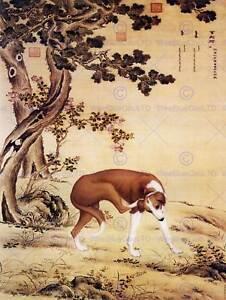 PAINTING-ANIMAL-CASTIGLIONE-PRIZED-DOGS-JINCHIXIAN-GREYHOUND-ART-PRINT-LAH373B