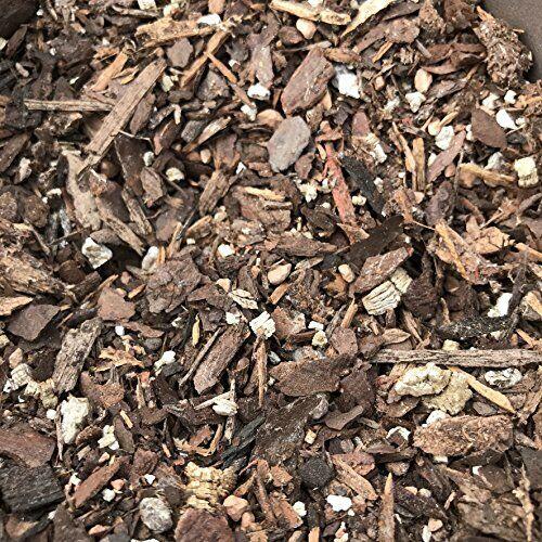 2 Quarts Perfect for any Bonsai Tree Tinyroots All-Purpse Blend Bonsai Soil