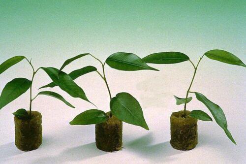 Rockwool Hydroponic Grow 100Pcs Grow Plug One Pack Grodan Starter Plugs Cubes