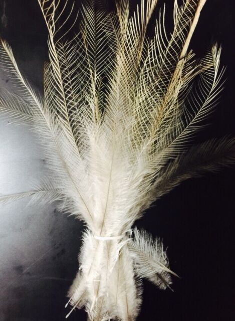 Natural Extra Light/white Emu Feathers - 25 feathers - 12-22 cm long