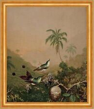 Brazilian Hummingbirds II Martin Johnson Heade Kolibri Vögel Tiere B A3 02863