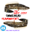 5x-de-haute-qualite-leurres-grenouille-Leurre-Crankbait-Hooks-Bass-Bait-Tackle-Nouveau miniature 11