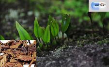 El Dr. T&T 100g hierba seca Shi Wei / Folium pyrrosiae / pyrrosia Hoja