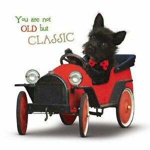 You-are-not-old-but-Classic-Terrier-Dog-in-car-Birthday-card-Have-a-great-day