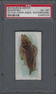 1889-N8-Allen-amp-Ginter-50-Fish-from-American-Waters-Blackfish-Graded-PSA-6-MK