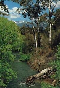 AUSTRALIA-SNOWY-MOUNTAINS-TREES-ALPINE-STREAM-POSTCARD-NEW