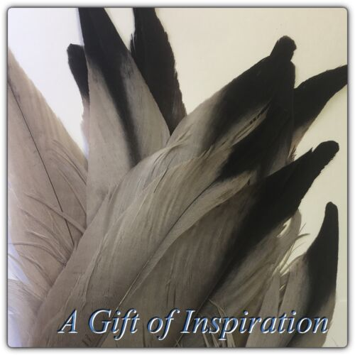 Single RARE Grey Natural Eagle Feather 33-36cm DIY Art Craft Smudge Fan Quill