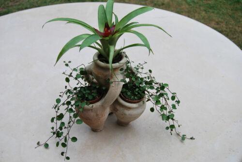 Mediterrane Kräuterschale  Vase  Übertopf Blumenkübel  aus Terrakotta Terracotta