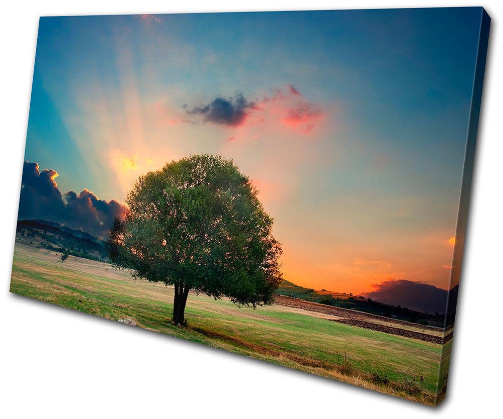Landscapes Landscape Tree Sunset  SINGLE Leinwand Wand Kunst Bild drucken