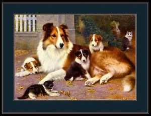 English Picture Print Scotch Collie Mother Dog Puppy Dogs Vintage Poster Art