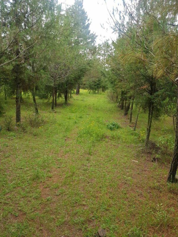 Venta de Rancho en Jilotepec estado de México