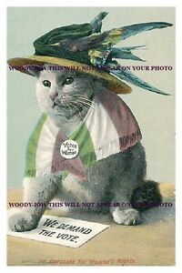 rp9287  Suffragette Comic Cat  photo 6x4 - Isle of Wight, United Kingdom - rp9287  Suffragette Comic Cat  photo 6x4 - Isle of Wight, United Kingdom