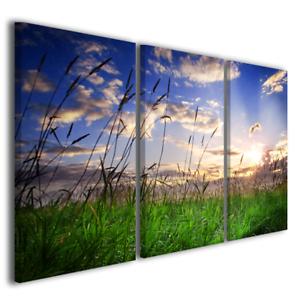 Quadro Su Tela Tramonto Su Prato Verde Stampa Foto Immagini Canvas
