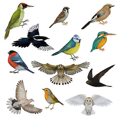 12 Awesome Bird Window Clings Non-adhesive Stickers Stop Flying Glass Strikes