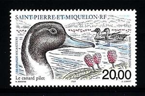 ST-PIERRE-E-MIQUELON-PA-1999-Gli-uccelli-migratori-Codone-comune