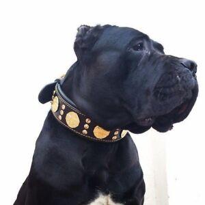 Bestia-034-Maximus-034-genuine-leather-dog-collar-amp-leash-Large-breeds-2-5-inch-wide