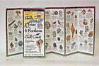 Shells and Beach Life of Texas & Northern Gulf Coast by Steven M. Lewers & Associates (Paperback / softback, 1997)