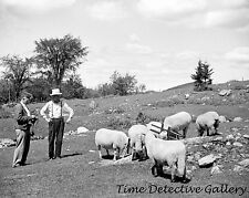 Farmers & Their Sheep, North Troy, Vermont - 1936 - Historic Photo Print
