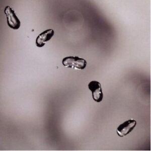 PETER-GABRIEL-UP-CD-10-TRACKS-INTERNATIONAL-POP-NEW