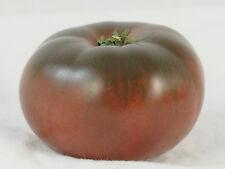 110mg Organic Cherokee Purple Tomato 35+ Seed Pack ~Large Beefsteak Tomatoes!