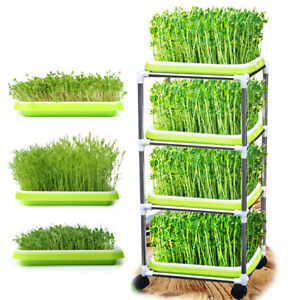 5 Set Plant Germination Tray Wheatgrass Seeds Growe 12 Cells Seed Sprouter Tray