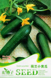 1-Pack-20-Dutch-Cucumber-Seeds-Cucumis-sativus-Cuke-Organic-C020