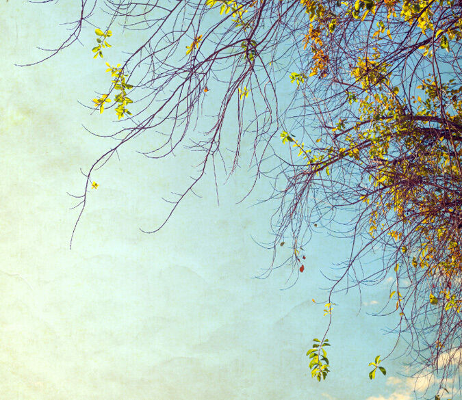 3D Spring Tree sky 3367 Paper Wall Print Decal Wall Wall Mural AJ WALLPAPER GB