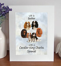 """Cavalier King Charles Spaniel 'Life is Better' 10""""x8"""" Mounted Picture Print Gift"""
