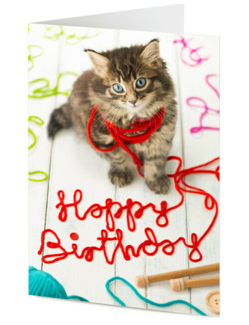 Mischievous Cute Cat Kitten Playing With Wool Says Happy Birthday