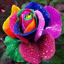 10 pcs Rare Rainbow Rose Seeds Perennial Flower seeds for Garden Decor