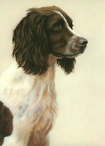 Nigel-Hemming-JUST-DOGS-LIVER-amp-WHITE-ENGLISH-SPRINGER-SPANIEL-Gun-Dogs-Art