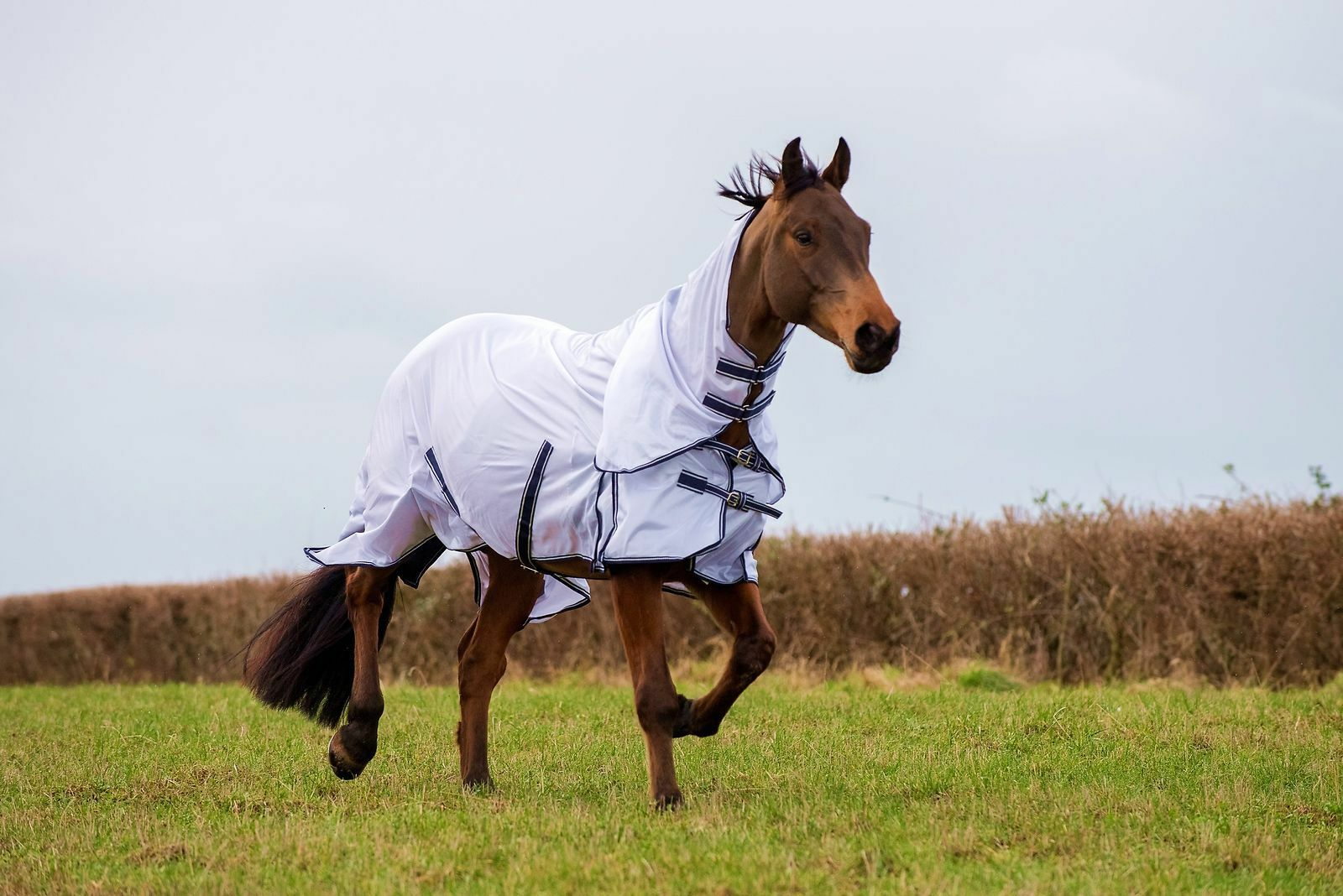 Gallop Fly Rug, Mesh Combo Fly Rug; Value for money