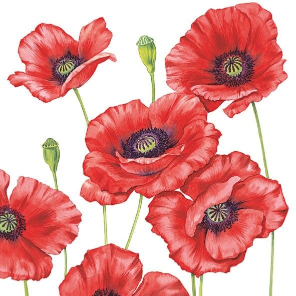 4 x Single Paper Table Napkin/Decoupage/Scrapbooking/Poppies