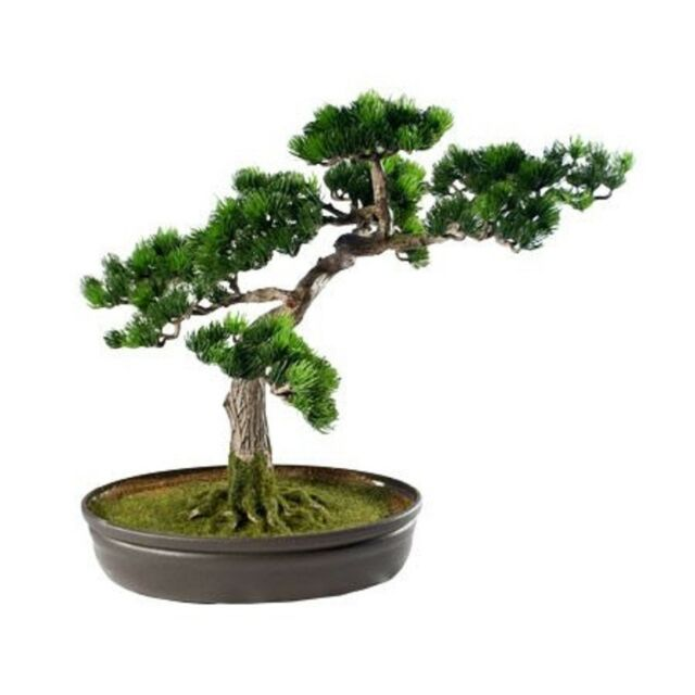T Trove Artificial Japanese Cedar Bonsai Tree 9 Inch Tall For Sale Online Ebay