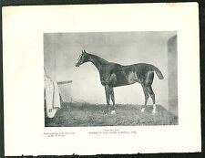 PIASTRA di libri-voluptuary, vincitore del 1884 Grand National.