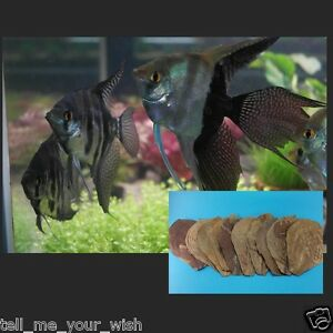 How to Breed Livebearing Tropical Fish: 12 Steps (with ...