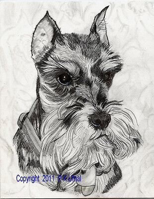 Pencil/&Ink Dog Art,Schnauzer #2 B/&W Print,By P K Ufnal