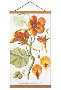 Biodiversity-Flower-Diagram-Garden-Nasturtium-Canvas-Wall-Art-Print-Poster