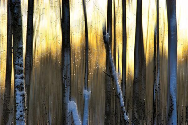 Martin Pelkey  The Forest at Dawn Keilrahmen-Bild Leinwand Bäume Wald abstrakt