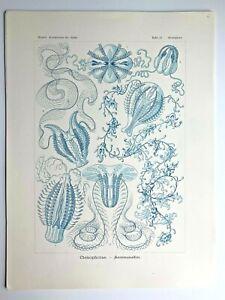 1899-Ernst-Haeckel-Kunstformen-1st-ed-Original-Antique-Plate-27-Hormiphora