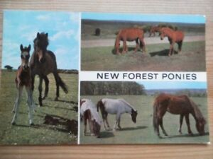 POSTCARD ANIMALS NEW FOREST PONIES  MULTI VIEW - Tadley, United Kingdom - POSTCARD ANIMALS NEW FOREST PONIES  MULTI VIEW - Tadley, United Kingdom