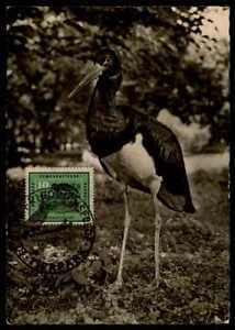 Complexé Rda Mk 1959 Oiseaux Scharzstorch Stork Maximum Carte Carte Maximum Card Mc Cm Dc57-afficher Le Titre D'origine Assurer IndéFiniment Une Apparence Nouvelle